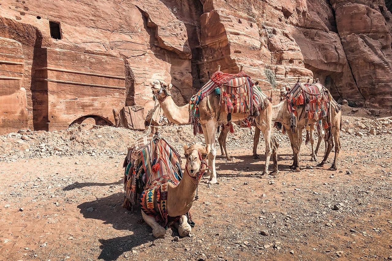 felsenstadt petra jordanien Kamelkarawane in Petra Jordanien