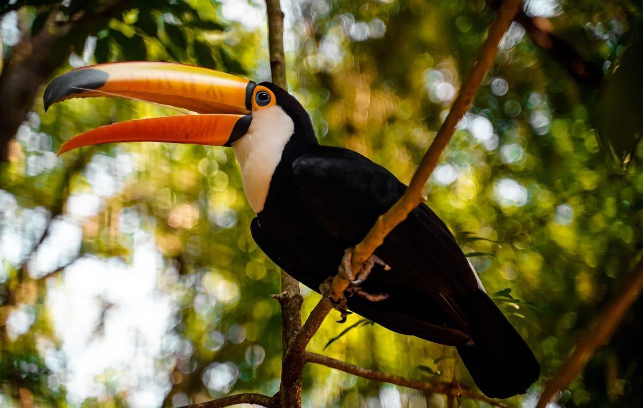 Reisetipps Iguazu Wasserfälle Brasilien