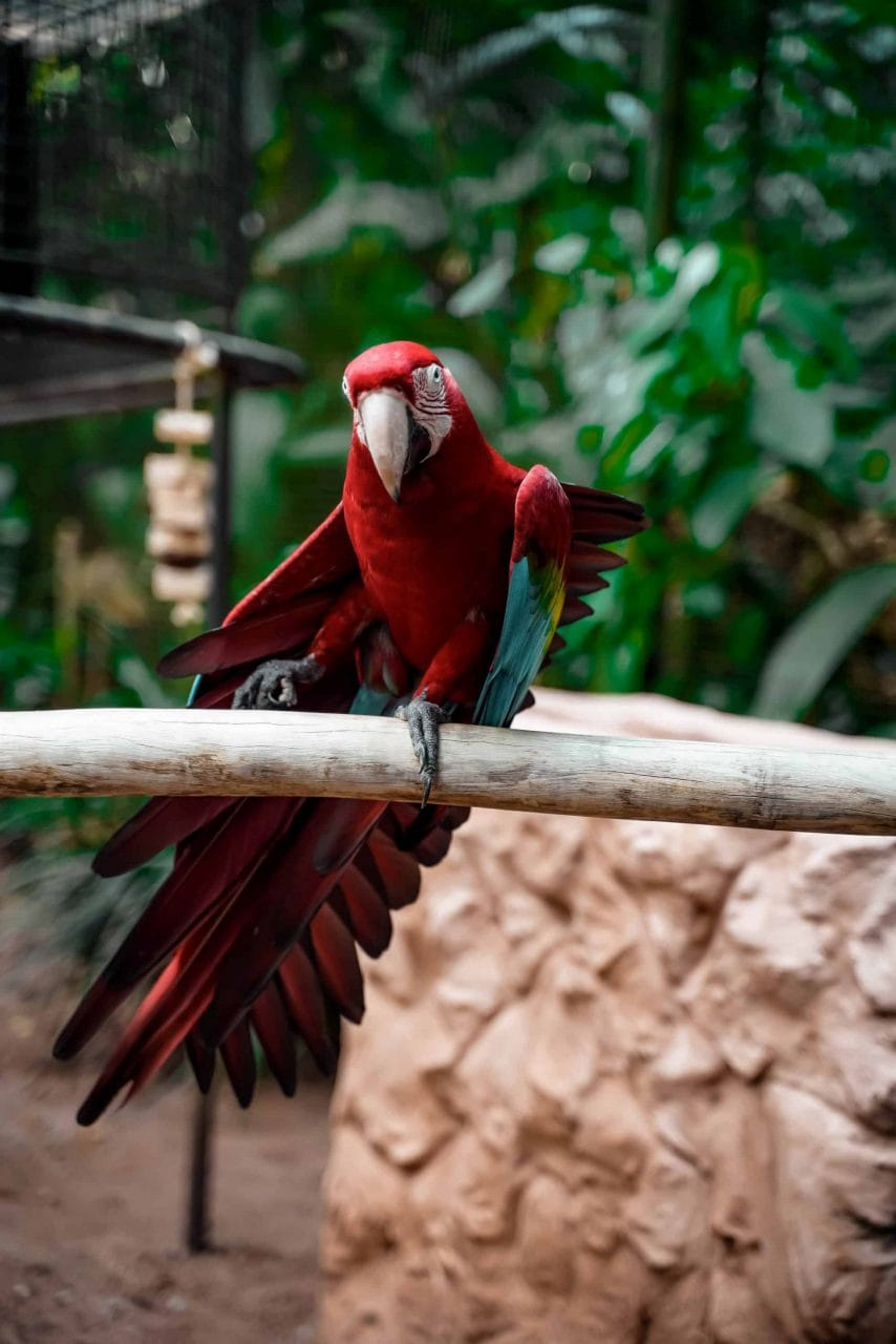 Tierwelt Brasilien Papagei