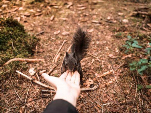 Eichhörnchen füttern in Fischen im Allgäu