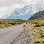 Travelguide Chile alles was du wissen musst