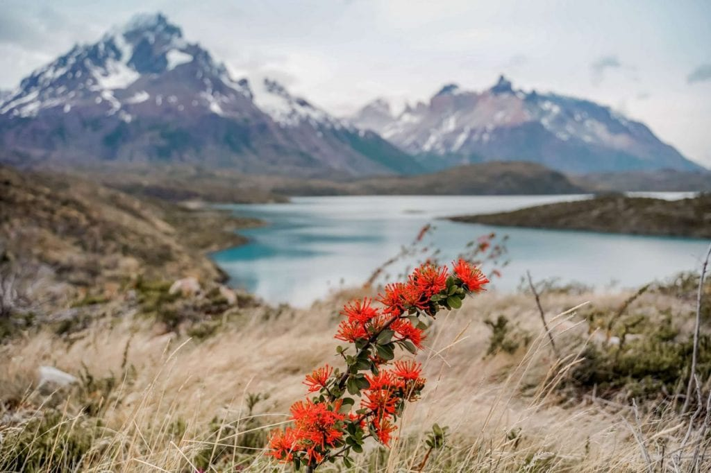 Torres del Paine Nationalpark Wanderrouten Cerro Paine Grande Ausblick