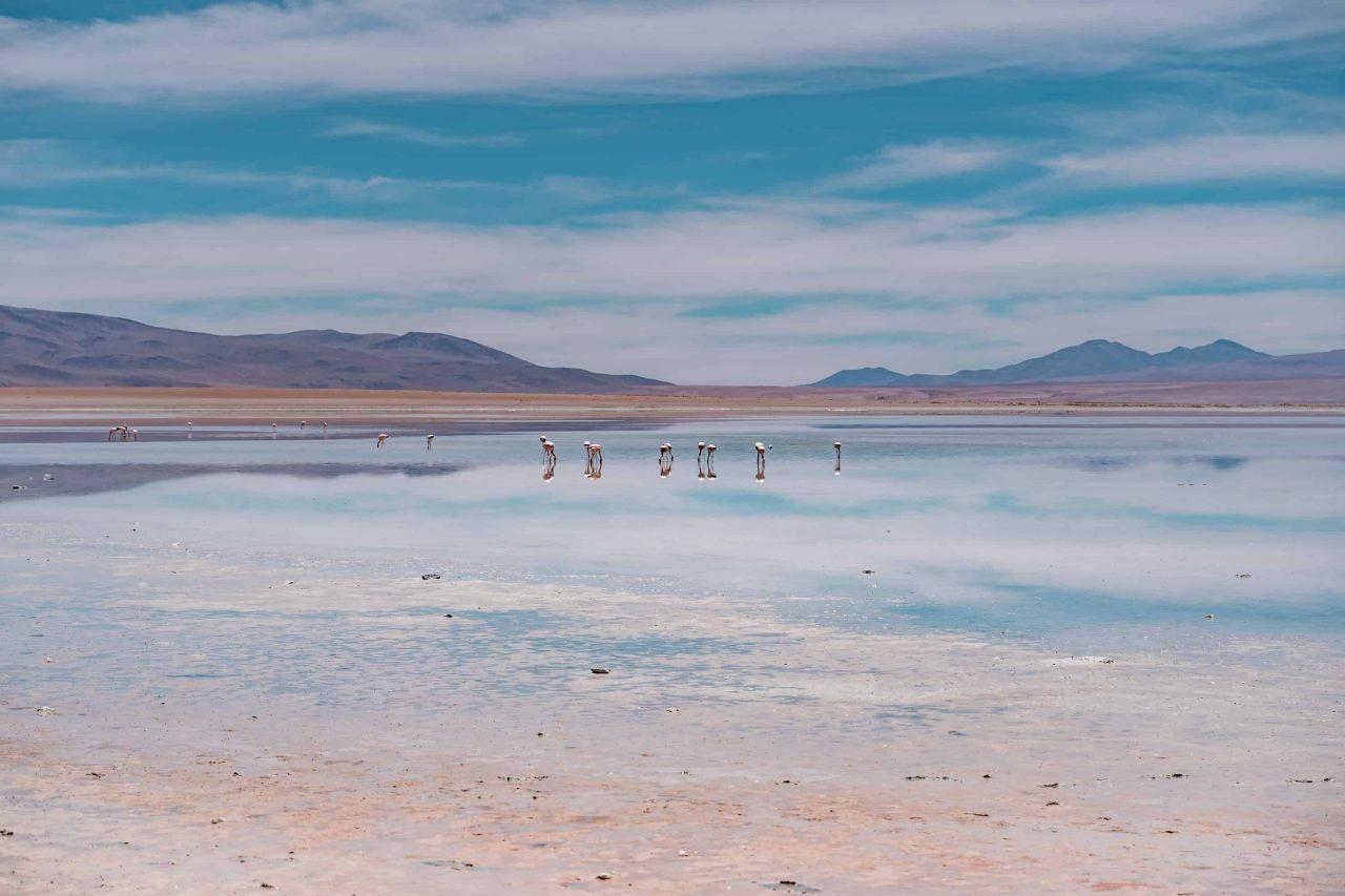 flamingos laguna chalviri bolivien hochland