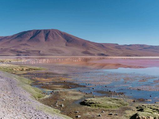 laguna colorada bolivien altiplano flamingos