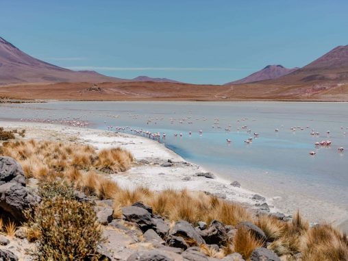 bolivien jeeptour uyuni laguna hedionda flamingos