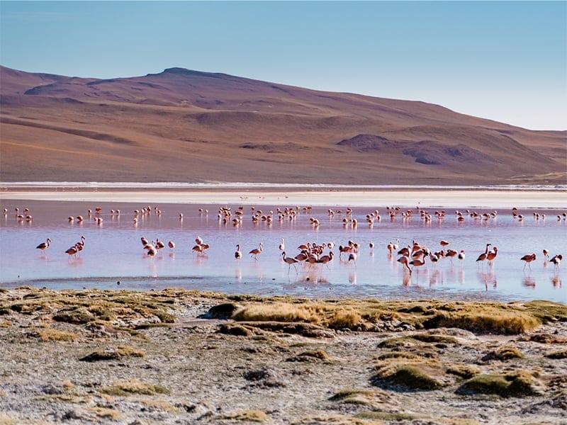 wissenswertes bolivien reisetipps travel guide