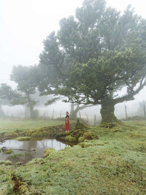 madeira mystischer nebelwald
